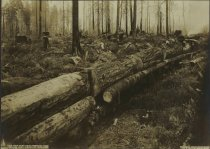 Image of D.VI.037 - downed trees for lumber