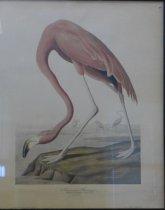 Image of Audubon pink flamingo