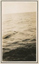 Image of 2016.007.030 - whale in Bering Sea