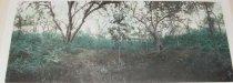 "Image of Frazer, ""Jungle Panorama"""