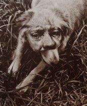 Image of Richard Scott Hill, Untitled 8
