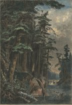 Image of The Pines of the Racquette - Print