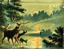 Image of Deer Shooting in the Adirondacks - Print