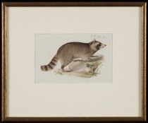 Image of Untitled: The Raccoon - Painting