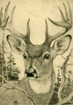 Image of [Untitled: Buck] - Print