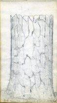 Image of [Tree Trunk] - Drawing