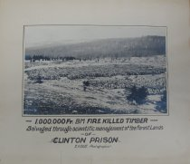 Image of [1,000,000 FT. BM Fire Killed Timber] - photo - print; mounted