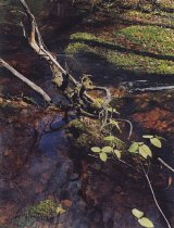 Image of Woodland Brook with Snag, Sargent's Pond Trail, Blue Mountain Lake - Transparency, Color