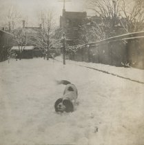 Image of Rex in Snow - Print, Photographic