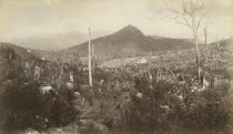 Image of [Track of the Charcoal Burners] - Print, albumen