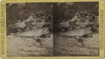 Image of Fish on Log - Stereoview