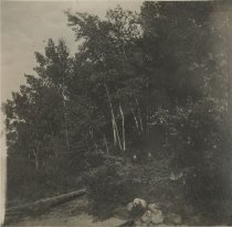 Image of Woods - Print, Photographic