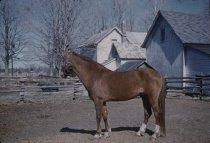 Image of Horse in Parishville - Transparency, Slide