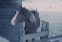 Image of Horse at a Barn - Transparency, Slide