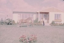Image of Horse and Handler in Front of House - Transparency, Slide