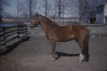 Image of Horse at a Farm - Transparency, Slide