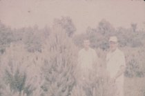 Image of Men and Pine Tree - Transparency, Slide