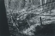 Image of Woods and Barbed Wire - Print, Photographic