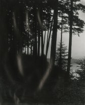 Image of Wooded Trail - Print, Photographic