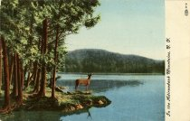 Image of In the Adirondack Mountains.  - Postcard