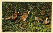 Image of Hidden from the Hunter, Adirondack Mountains, N.Y.  - Postcard