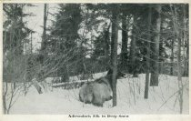 Image of Adirondack Elk in Deep Snow - Postcard