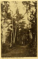 Image of Road through the Birches, Long Lake, N.Y. - Postcard