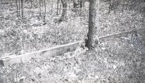 Image of Wooden Boards by Trees - Negative, Film