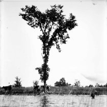Image of A992.022.0769 - Negative, Glass Plate
