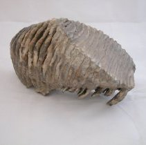 Image of 979.035.001 - Fossil
