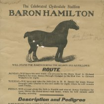 Image of The Celebrated Clydesdale Stallion Baron Hamilton