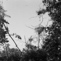 Image of A2014.003.K-65-08 - Negative, Roll Film