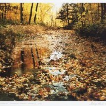 Image of Hunter, George - Mississauga-Sawmill Creek in Autumn