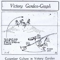 Image of Victory Garden-Graph