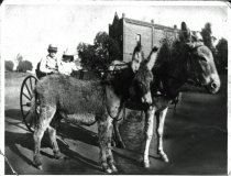 Image of Donkey cart to school