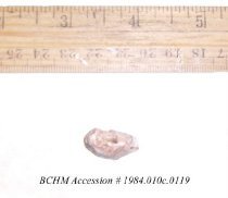 Image of Shell - 1984.010c.0119