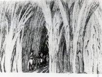 Image of Print, Photographic - 1989.002p.0001