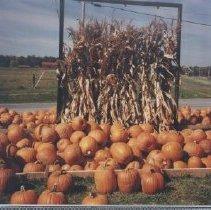 Image of Clarke Co. Fall-Pumpkins At Nalls'