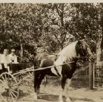 Image of 2015.00028.005 - Children in a Pony Cart