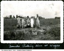 "Image of Five people picking tomatoes, Dubois County, Indiana, ca. 1945 - The photo is captioned ""Tomato picking time at Wayers (Wayne's?).""  The boxes are labeled ""MLW""."