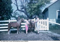 Image of Two adults and a girl with ponies, Wabash County, Indiana, ca. 1960 -