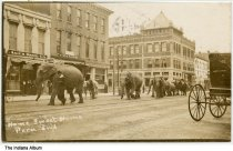 """Image of Elephants and camels walking past businesses, Peru, Indiana, ca. 1910 - Businesses seen are U. A. Ager Drug Co. and First National Bank. The caption reads """"Home Sweet Home, Peru, Ind."""""""