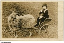 Image of Lois Kathryn Ries in a goat cart, ca. 1910 - On the back the child is identified as Lois Kathryn Ries, daughter of Laura Wilson Ries.