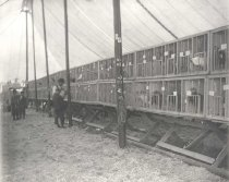 Image of Chicken Tent at the Winnebago County Fair - P1936.3.174