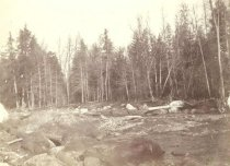 Image of River in Forest