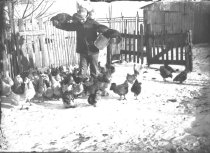 Image of Nick Bruehl feeding his chickens - P2002.14.429