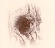 Image of Dick the Cat - P2002.29.53