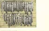 Image of A catch of Northern Pike and Pickerel. - p2003.20.1072