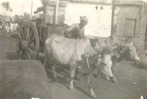 Image of Ox Cart in Calcutta, India - P2006.7.13