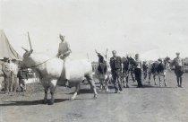 Image of Bulls at the Winnebago County Fair
